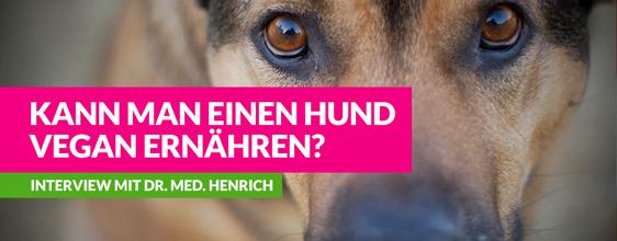 Kann man einen Hund vegan ernähren? – Interview auf Vegannews