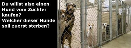 Irrsinn Hundezucht