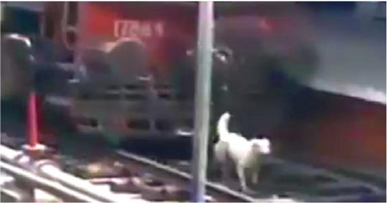 Unglaublich – Hund wird von Zug überrollt und läuft weg