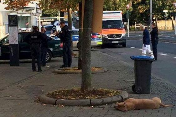 Zwei Hunde als Opfer in Deutschland – Mitten in der Fußgängerzone: Polizei erschießt zwei Hunde
