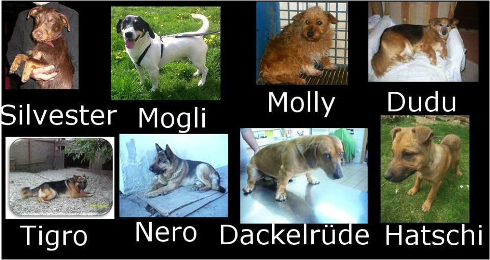 Notfälle!!! Diese Hunde brauchen unsere Hilfe!