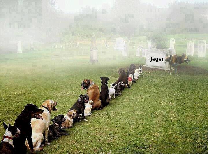 Demo von Hunden gegen Jäger