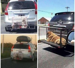 hundetransport-01-jpg