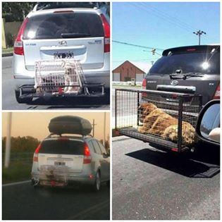 Es ist kaum zu fassen, wie Menschen ihre Hunde transportieren und was für kranke Hirne sich so etwas ausdenken
