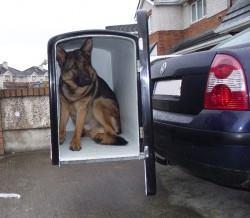 hundetransport-02-jpg