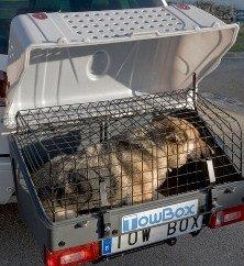 hundetransport-04-jpg