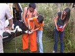 Lachende, fröhliche junge Leute schächten 6 Kälbchen und freuen sich, dass es auf Video festgehalten wird