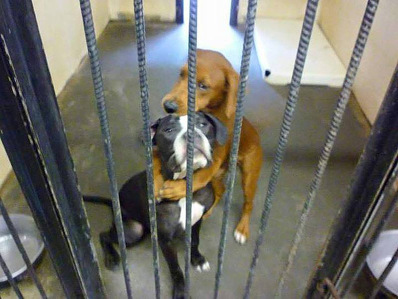Foto rettet zwei Hunden das Leben