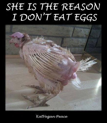 Menschen mit Empathie essen keine Eier