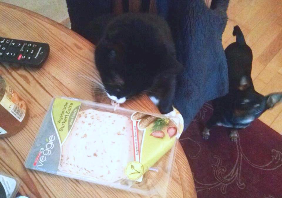 Katze stiehlt vegane Wurst – wird die Katze jetzt sterben?