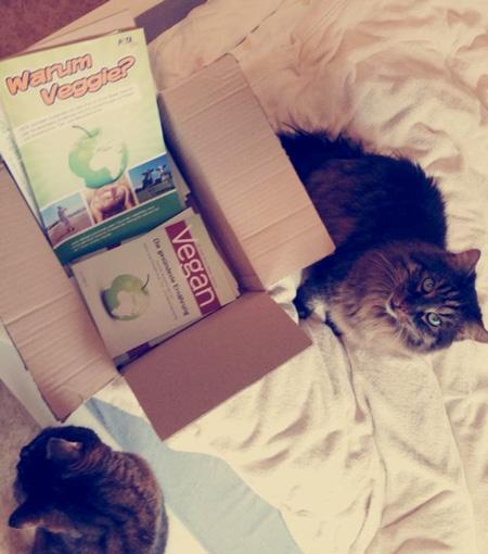 """Vegan-Broschüre von der Katze überprüft und für """"tierisch gut"""" befunden!"""