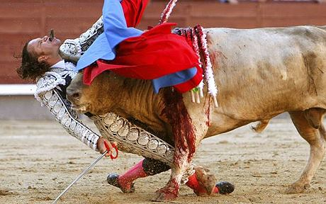 """Gute Nachricht: Pariser Gericht entscheidet, dass Stier""""kampf"""" (Stierquälerei) kein nationales Kulturerbe ist"""