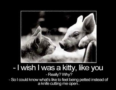 """""""Ich wünschte ich wäre ein Kätzchen wie Du."""