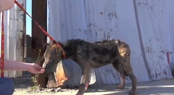 Video: Wie ein kranker heimatloser Hund gerettet wurde