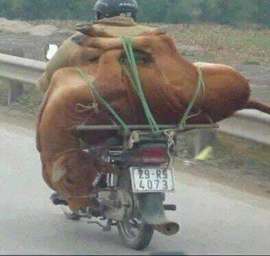 Bist Du über diese Behandlung von Tieren empört?