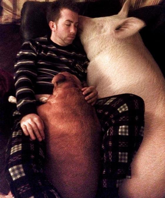 Hunde kraulen und Schweine essen? Und damit dem gesellschaftlichen Idealbild entsprechen?
