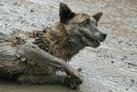 Die Massentötung von Strassenhunden in Rumänien verstösst gegen europäisches Recht