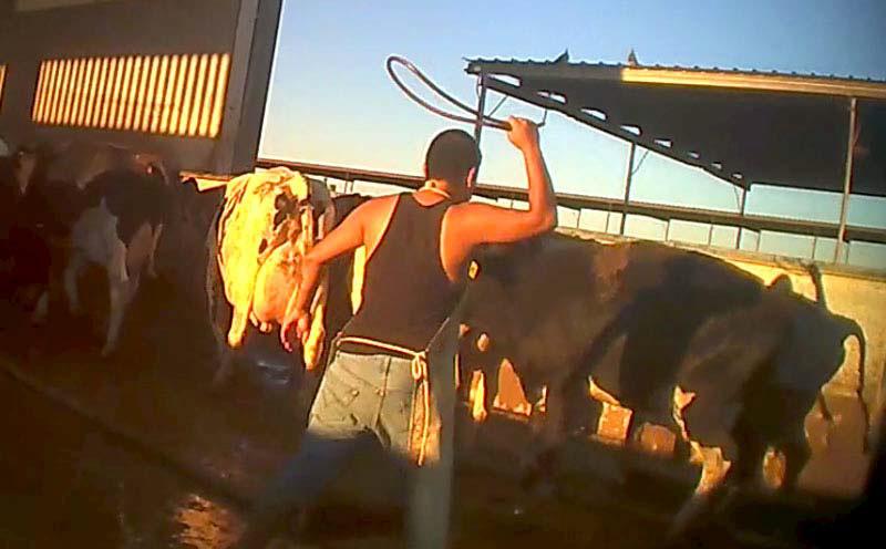 Video bitte anschauen … Vegetarier und Omnivore!