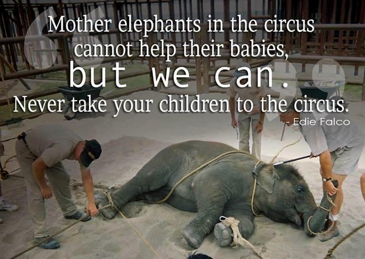 Mutter-Elefanten können ihren Babys im Zirkus nicht helfen,