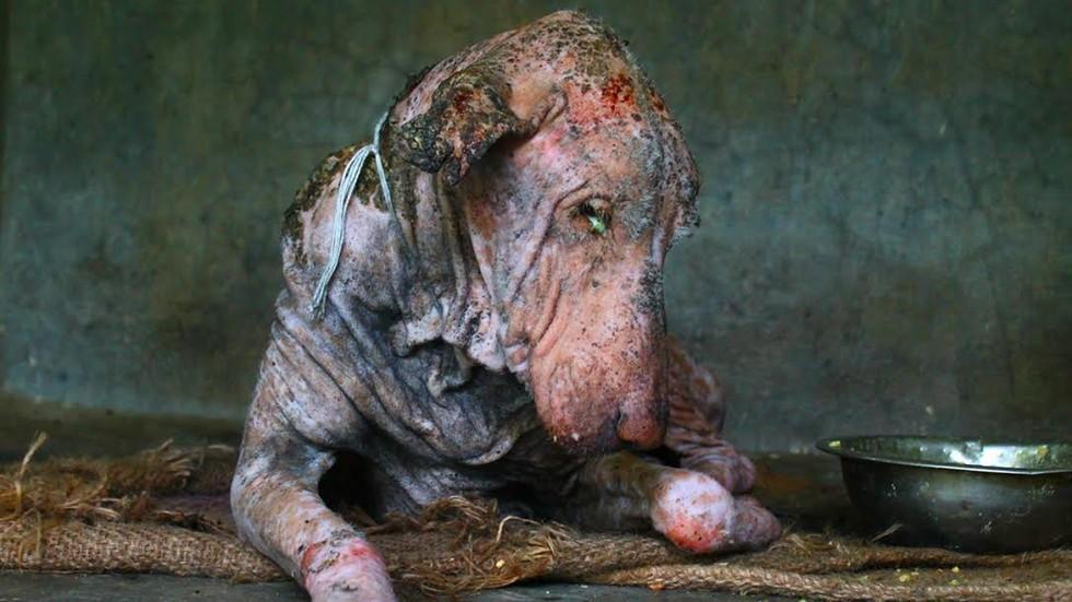Kranker, verhungernder Hund von indischen Tierschützern gerettet – beeindruckende Bilder