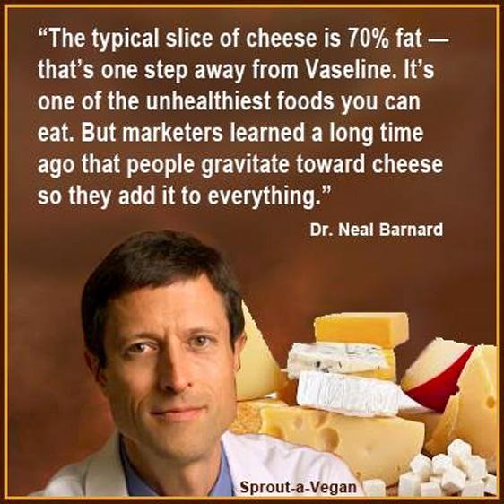"""""""Ein typisches Stück Käse hat 70 % Fett. Das ist fast wie Mineralöl. Käse ist eine der ungesündesten Nahrungsmittel überhaupt. Marketingfachleute haben schon vor langer Zeit erkannt, dass die Leute von Käse angezogen werden. Deshalb fügen sie ihn zu fast a"""