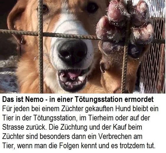 Das ist Nemo – in einer Tötungsstation ermordet