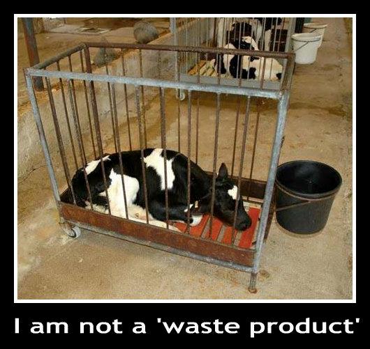 Konsumieren Sie Milch und Milchprodukte?
