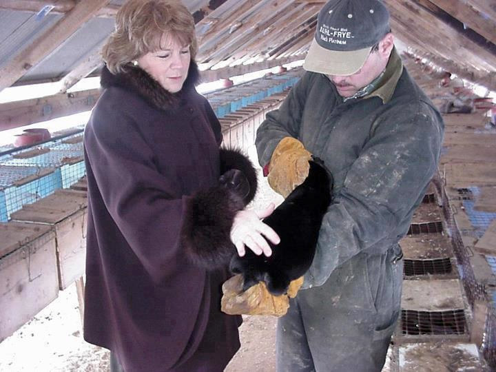 Ist Pelz moralisch vertretbar?