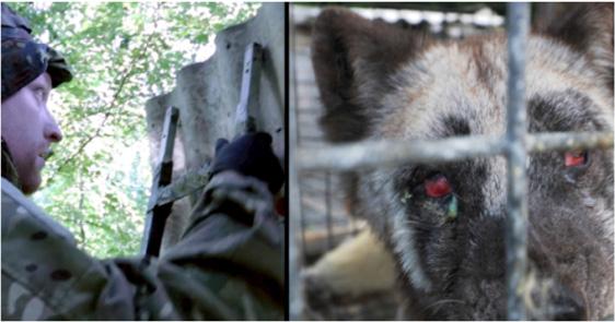 Sogar die eher tierfeindliche WELT berichtet das Tierleid in Pelzfarmen und die Skrupellosigkeit der Pelzfarmer