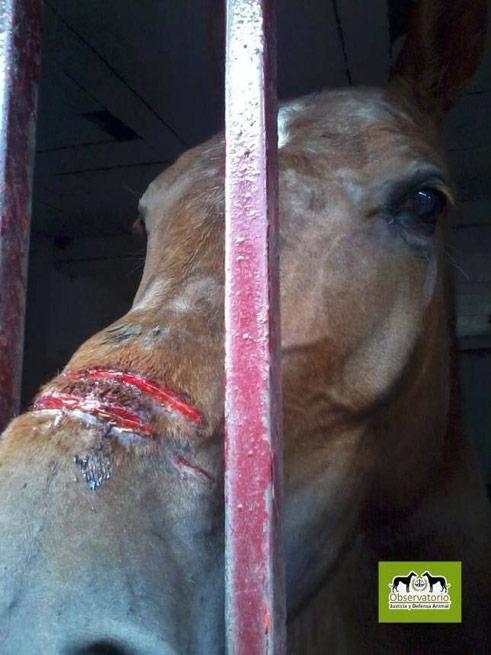 """Ein Stierquäler (euphemistisch auch Stier""""kämpfer"""" genannt) ist in Spanien zu einer Bagatellstrafe von 600 Euro wegen des Missbrauchs von Tieren verurteilt worden!"""