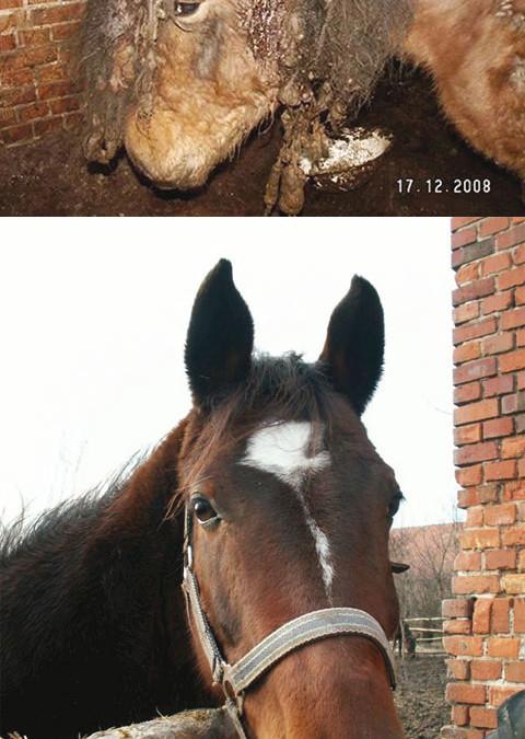 Erstaunlich, wie gut einzelnen Tieren geholfen werden kann – so wie diesem Pferd