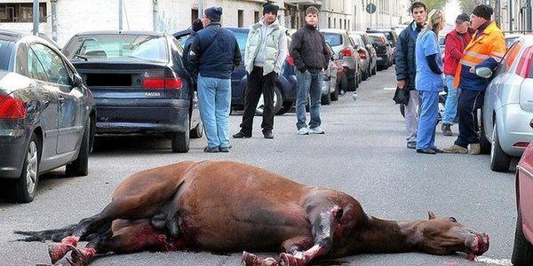 Petition gegen brutale Pferderennen der italienischen Mafia