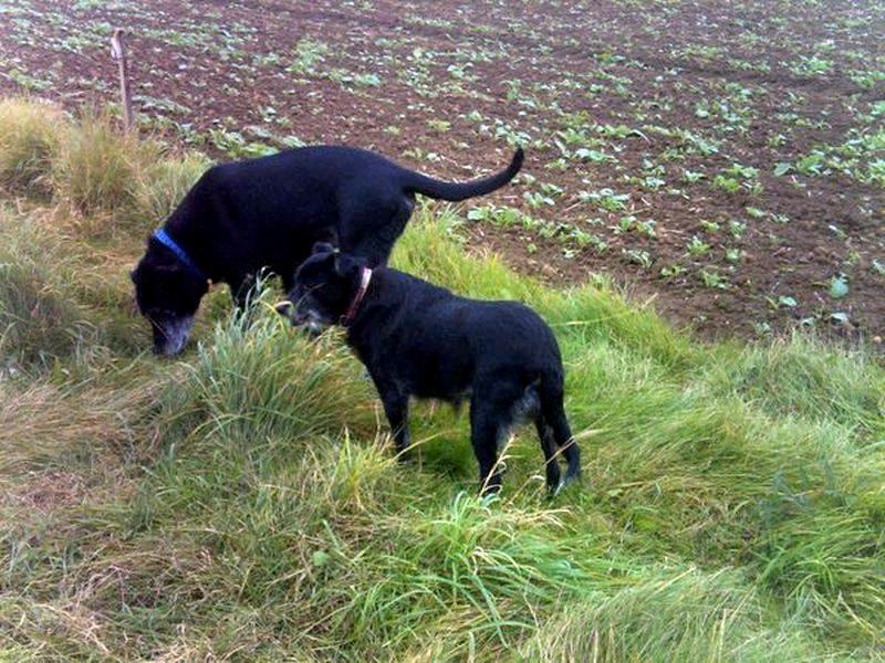 Vegane Haustierfütterung – Ernährungsbericht Greta und Samuel