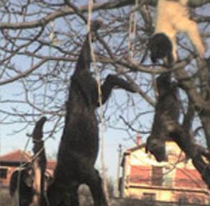 Unfassbar – Man glaubt mit der Zeit schon alle Grausamkeiten gegenüber Tieren zu kennen, aber die Psychopathen erfinden immer neue Abscheulichkeiten