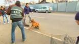 TV-Beitrag über Strassenhunde im Osten