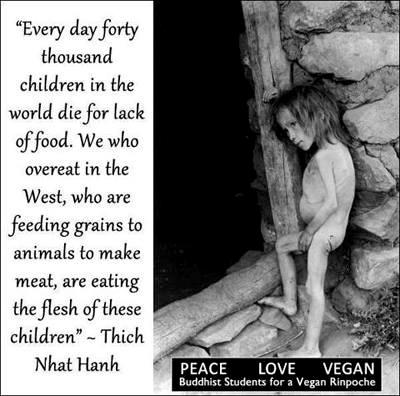 """""""Jeden Tag sterben 40.000 Kinder, weil sie nichts zu essen haben. Wir im Westen, die wir überernährt sind und Tiere mit Getreide füttern, um Fleisch zu produzieren, essen diese Kinder."""" Thich Nhat Hanh"""