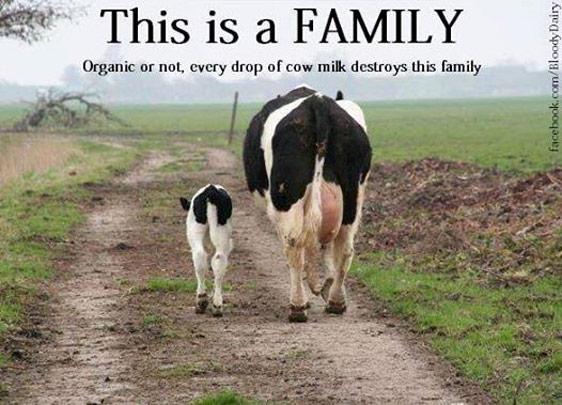 """Das ist eine Familie – kann das Leben von Milchkühen """"tiergerecht"""" gestaltet werden?"""