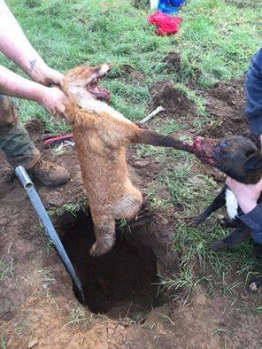 Jagd: Psychopathen hetzen Tiere auf Tiere und ermorden sie