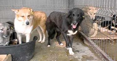 So geht es in öffentlichen Tierheimen in Rumänien zu – eine Helferin berichtet