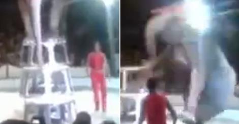 Video: Horrende Tierquälerei im Zirkus – Elefant wird auf Plattform gezwungen und stürzt ab