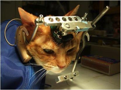 Wissenswertes über Tierversuche und ihre Übertragbarkeit auf den Menschen