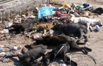 Ein totes Kind und Tausende toter Hunde in Rumänien – Wer ist schuld?