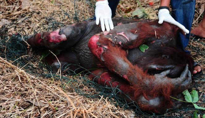 500 km2 Regenwald vernichtet