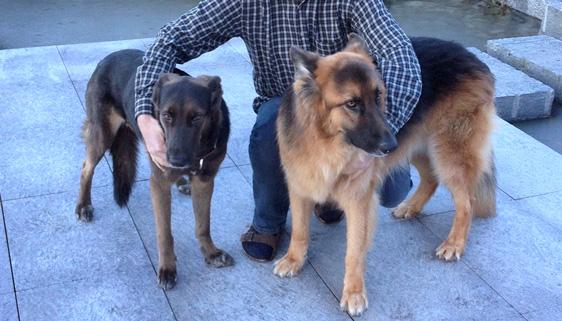 Hier sind 3 Veganer zu sehen – Zwei hübsche (Trufa und Bruno) und ein weniger hübscher :-)