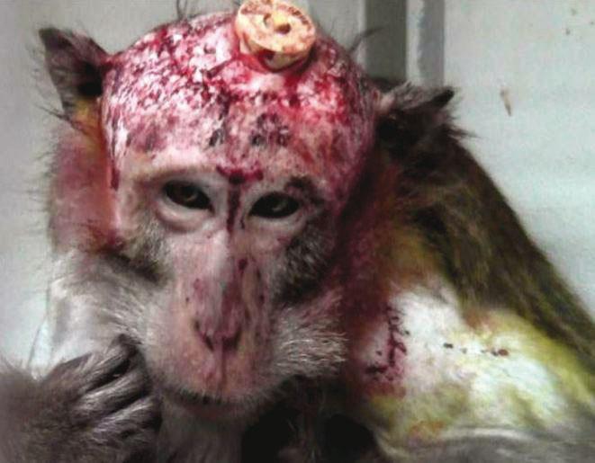 Strafanzeige gegen Tübinger Affenexperimentatoren