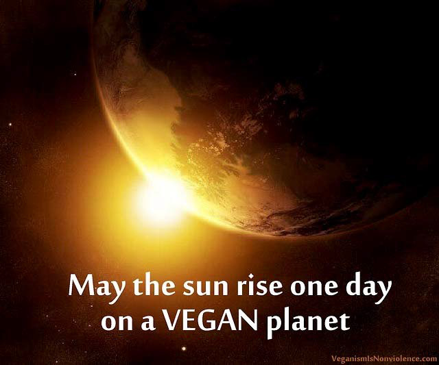 Möge die Sonne eines Tages aufgehen und auf einen veganen Planeten scheinen!