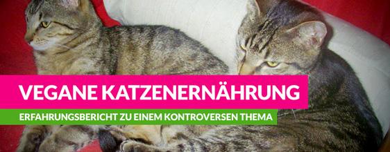 Vegane Katzenernährung – schönes Interview mit einem Katzenhalter
