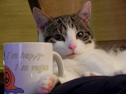 Vegane Katzenfütterung