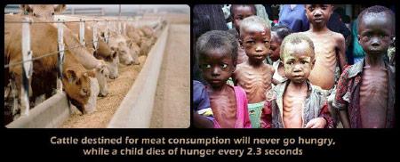 Veganismus und Menschenrechte