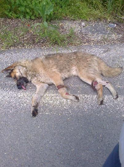 Nachricht von Tierhilfe Hoffnung e.V.:
